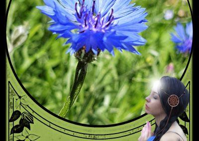 FM Cornflower - Intuition image