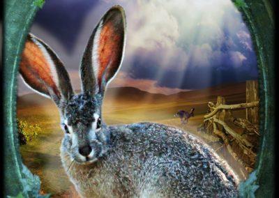 Hare - Transformation