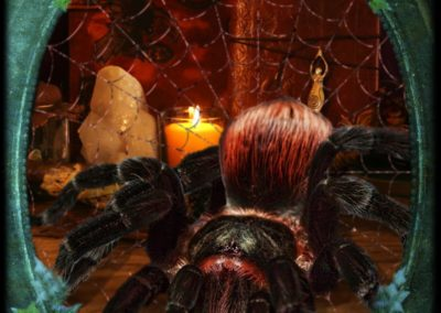 Spider-Deception