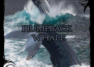 Humpback Wale